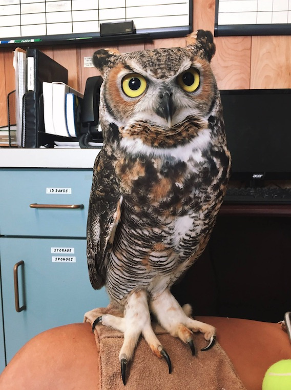 2nd chances wildlife rehab