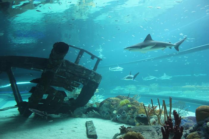 caribbbean exhibit texas state aquarium corpus christi