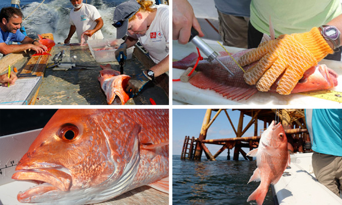Fish for the 'Golden Ticket' Red Snapper Corpus Christi