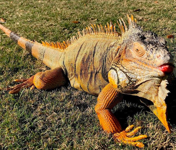 Reptiles relish new digs at Corpus Christi botanical gardens