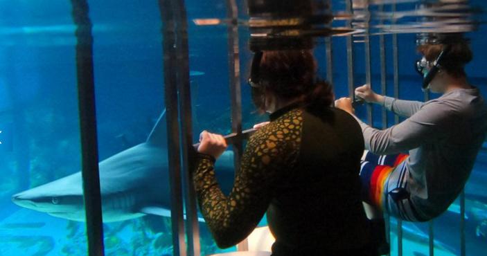 Snorkel with sharks at Texas State Aquarium