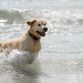 dog in surf