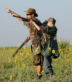 dove hunting south texas
