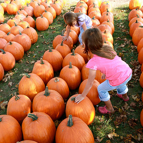 2016 Pumpkin Patch Round-Up