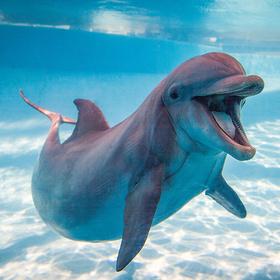 Dolphin Texas State Aquarium