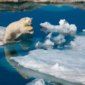 Texas State Aquarium Polar Exhibit Explores Wildlife