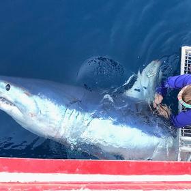 Raise a Glass to Shark Week at Brewster Street Ice House Corpus Christi