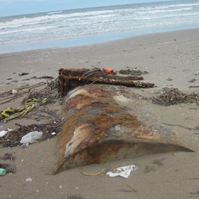 Padre Island National Seashore Reopens