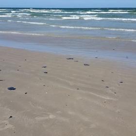 Beaches Still Open in Corpus Christi