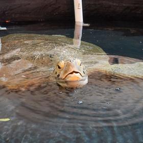 exas State Aquarium live daily on Facebook