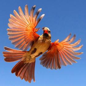 birdiest festival in america corpus christi