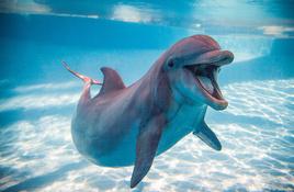 Texas State Aquarium Closed Until April 2