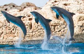 Dollar Days at the Aquarium!