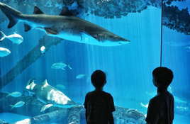New hours, new experiences at Texas State Aquarium