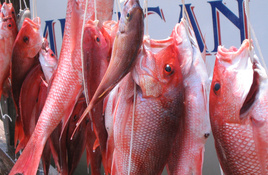 Texas Red Snapper Season Closing Early on August 2