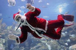 Texas State Aquarium in Corpus Christi Christmas Shows
