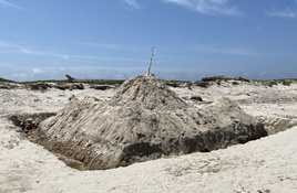 Flatten your sandcastles to protect turtles, people