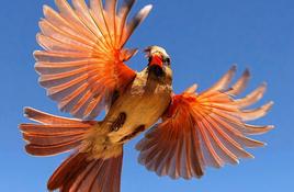 Corpus Christi adds to Birdiest Festival in America