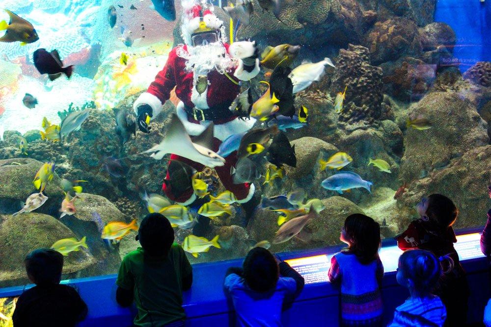 Santa dives daily at aquarium in December