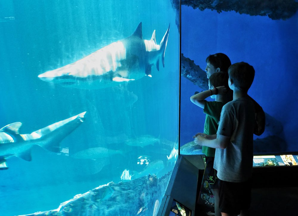 Texas State Aquarium a Perfect Family Outing