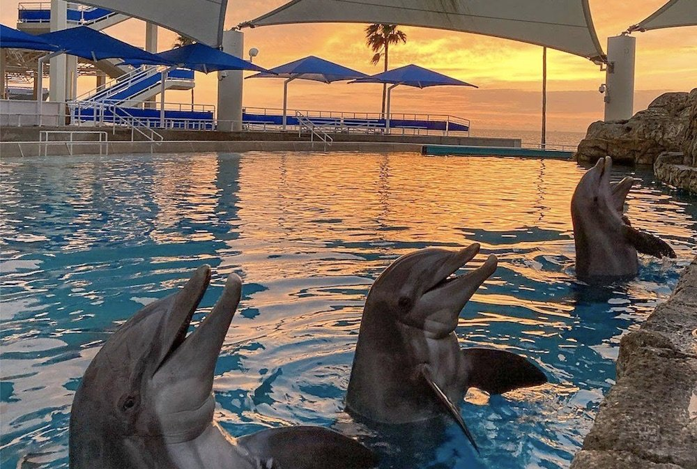 Texas State Aquarium Experience Not Hampered by COVID Protocols