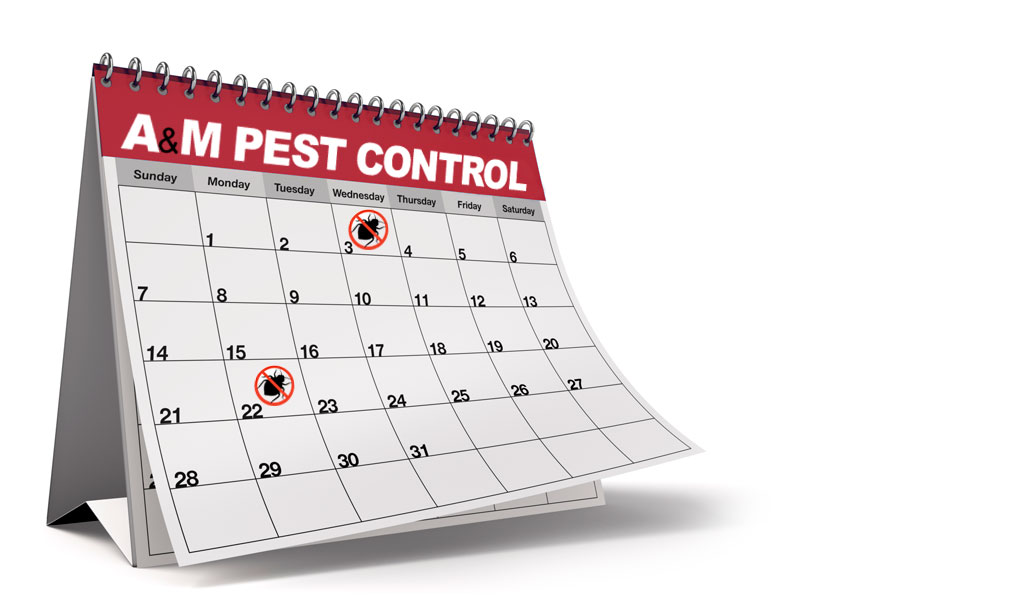 A M Pest Control Eliminates Those Creepy Crawlers For Good