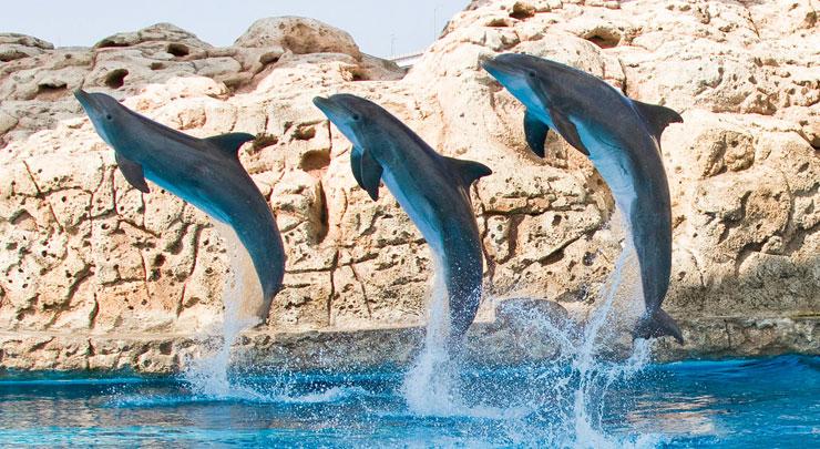 Dollar Days At The Texas State Aquarium
